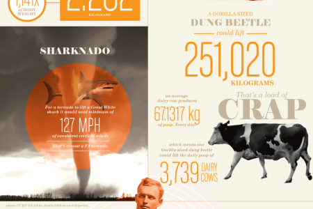 Do You Even Lift, Bro? Infographic