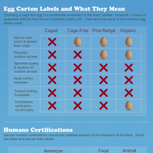 Do your eggs come from happy hens? Infographic