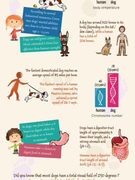 Dog Anatomy in Pictures Infographic