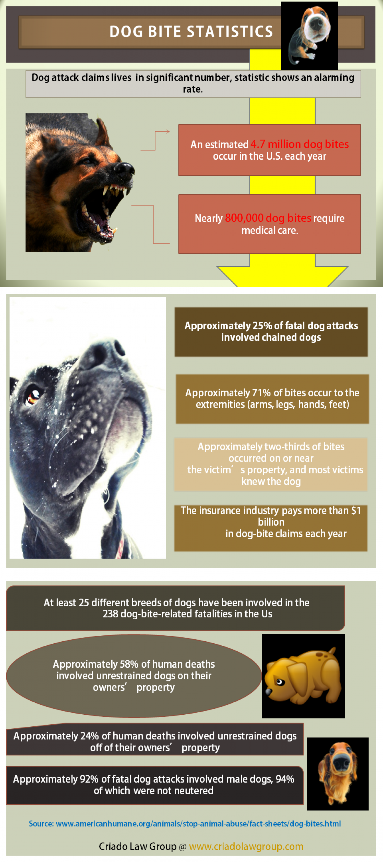 Dog Bite Statistics  Infographic