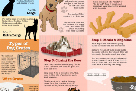 Dog Crate Training 101 Infographic