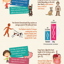 Dog vs Human Anatomy Infographic
