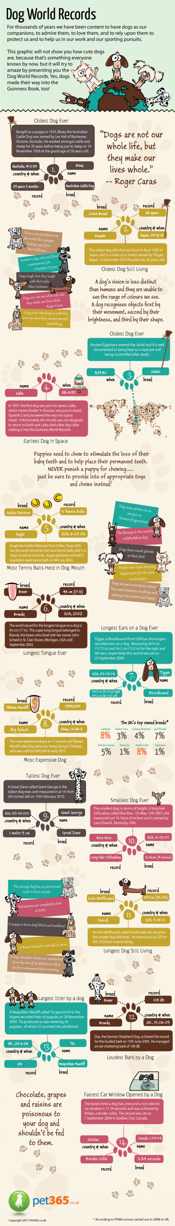 Dog World Records Infographic
