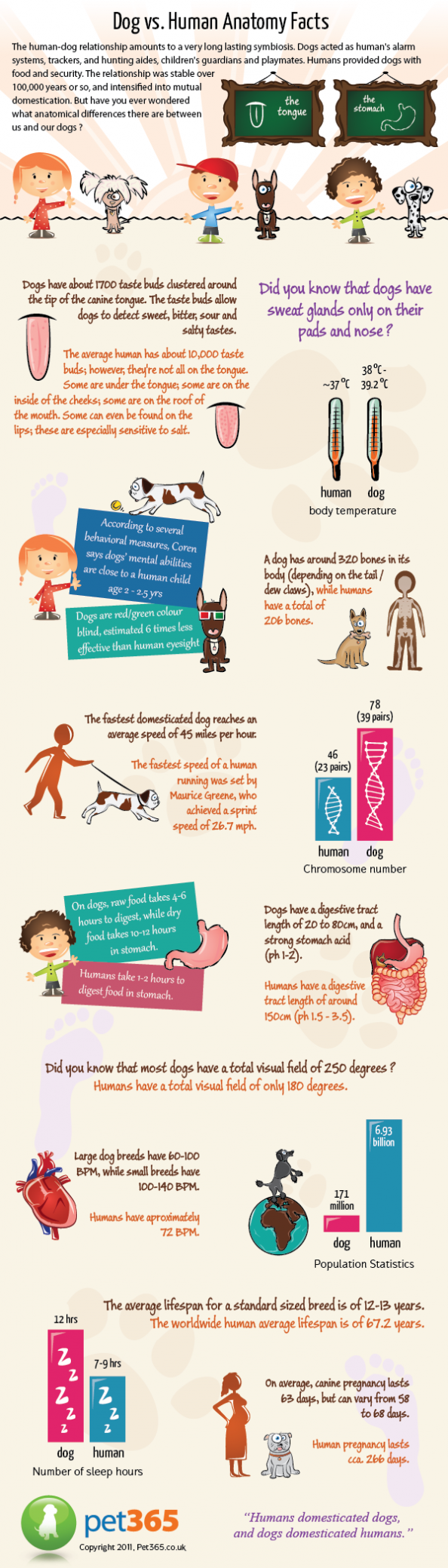 Dogs vs Human Anatomy Facts Infographic