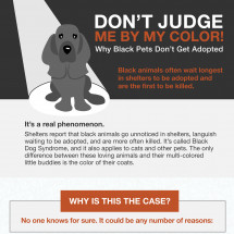 Dont' Judge Me By My Color! Infographic