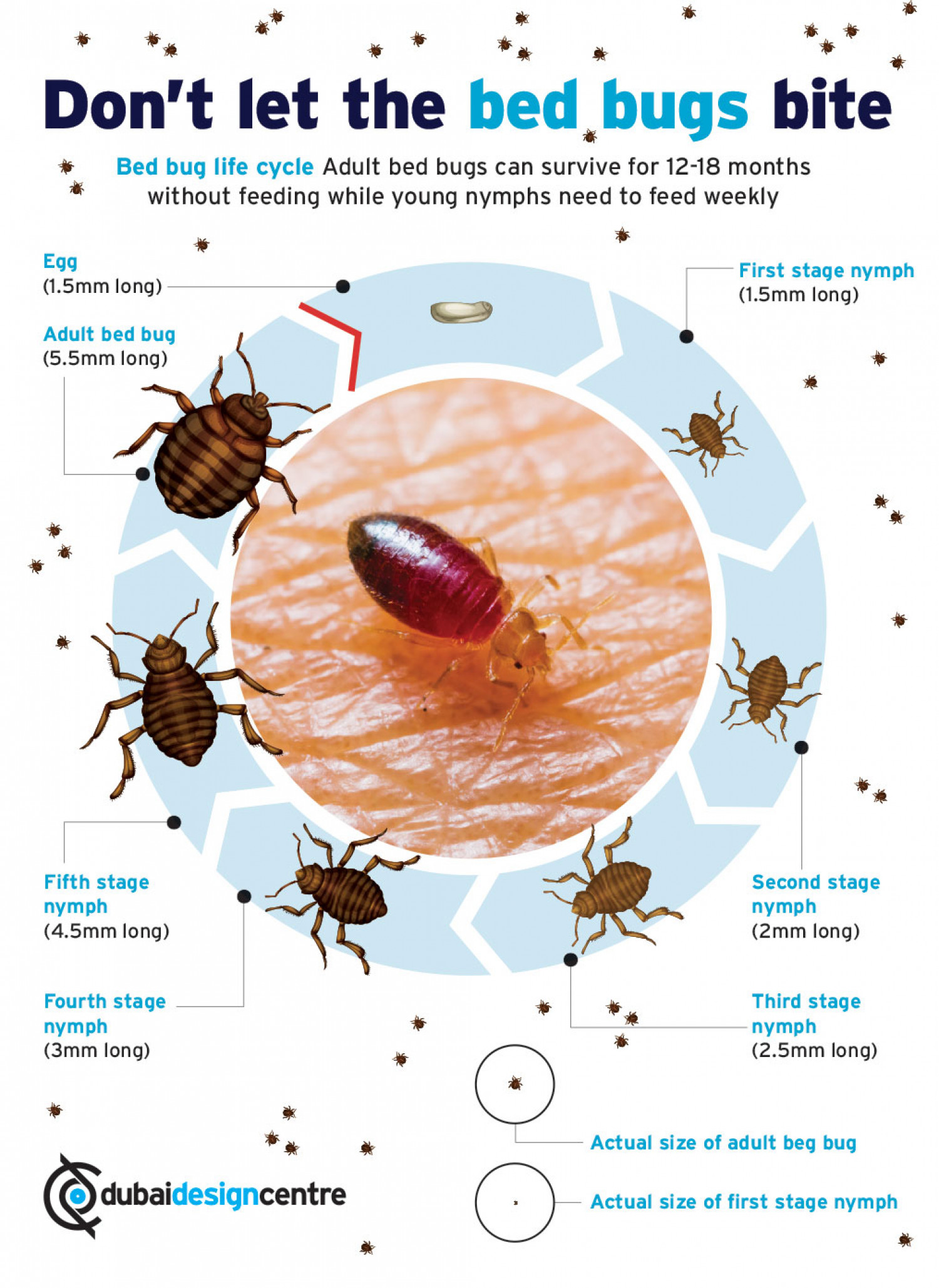 Don't let the bed bugs bite Infographic