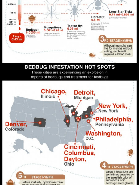 Don't Let the Bedbugs Bite Infographic