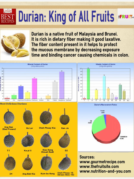 Durian: King of All Fruits Infographic