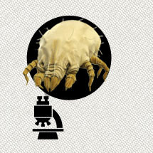 Dust Mites: They Are Everywhere Infographic