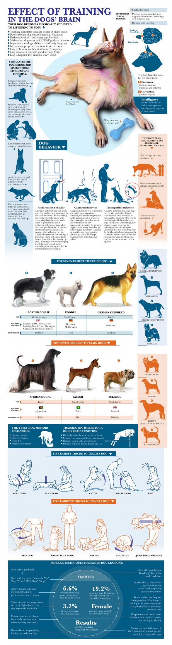 Effect Of Training In The Dog Brain