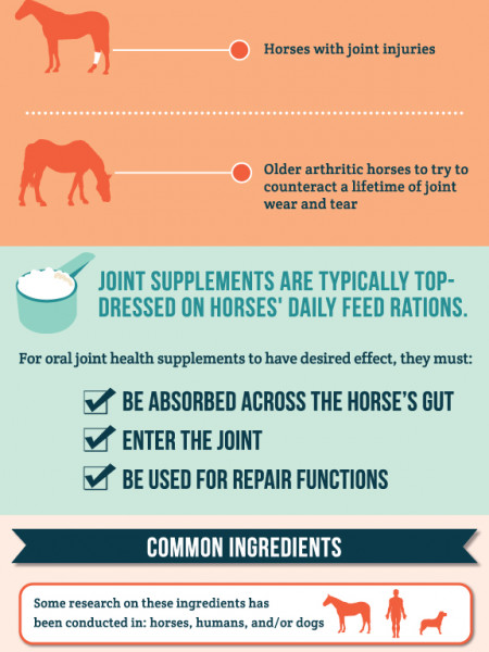 Joint Health Supplements Infographic