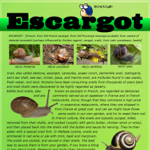 Escargot Infographic