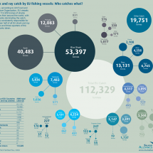   European Shark and Ray Fishing Infographic