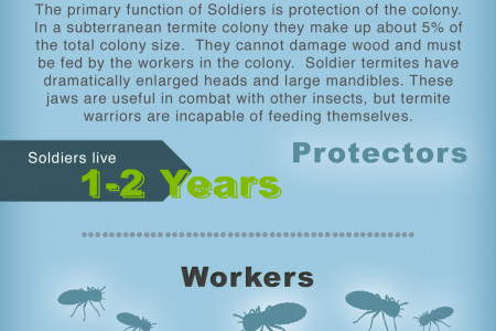 Everything A Homeowner Needs To Know About Termites Infographic