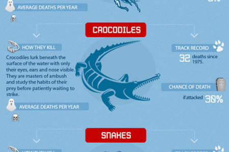 Everything in Australia Can Kill You Infographic