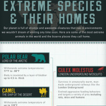 Extreme Species and Their Homes Infographic