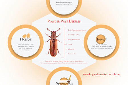 Facts About Powder Post Beetles Infographic