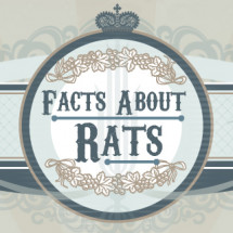 Facts About Rats Infographic