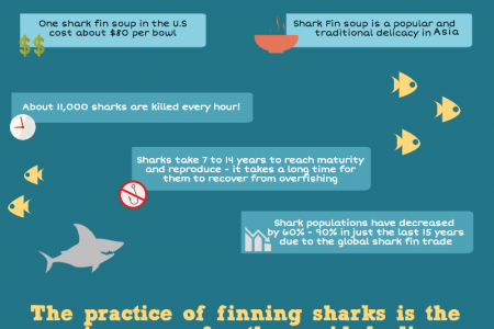 Facts You Didn't Know About Sharks Infographic