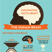 Fascinating Facts About the Human Brain Infographic