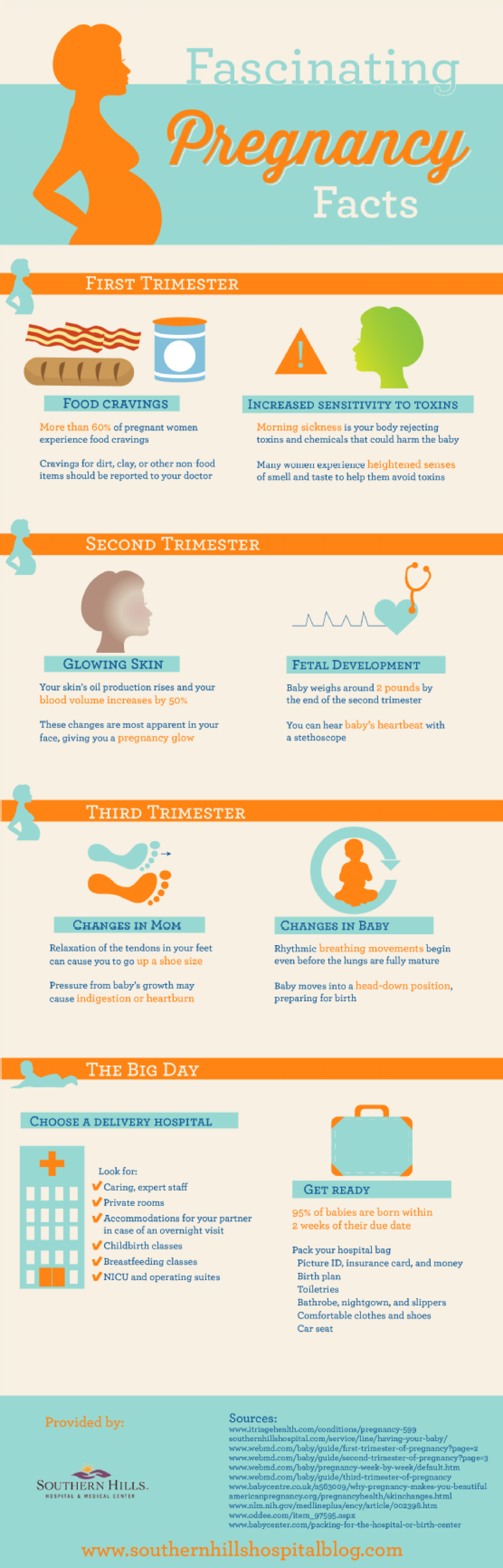 Fascinating Pregnancy Facts Infographic