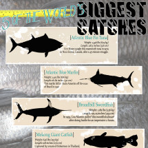 Five of the World's Biggest Catches Infographic