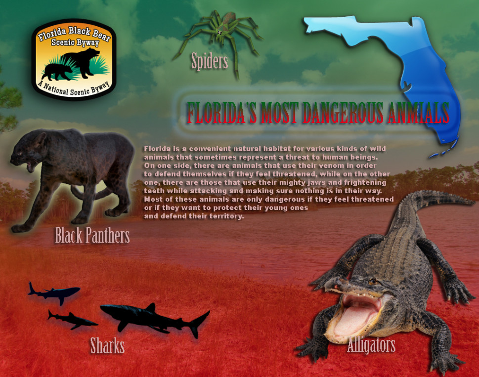 Florida's Most Dangerous Animals Infographic