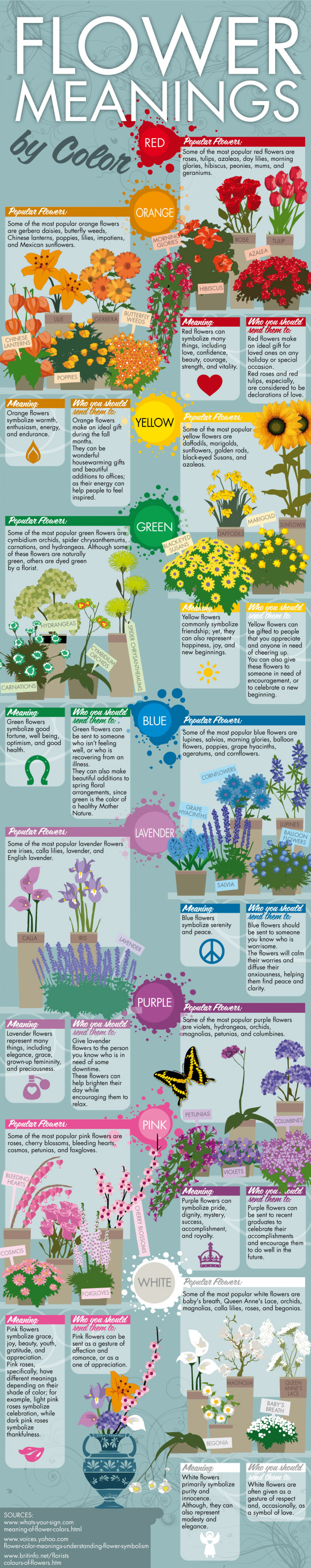 Flower Meanings By Color Infographic