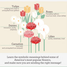 Flowers and Happiness Infographic
