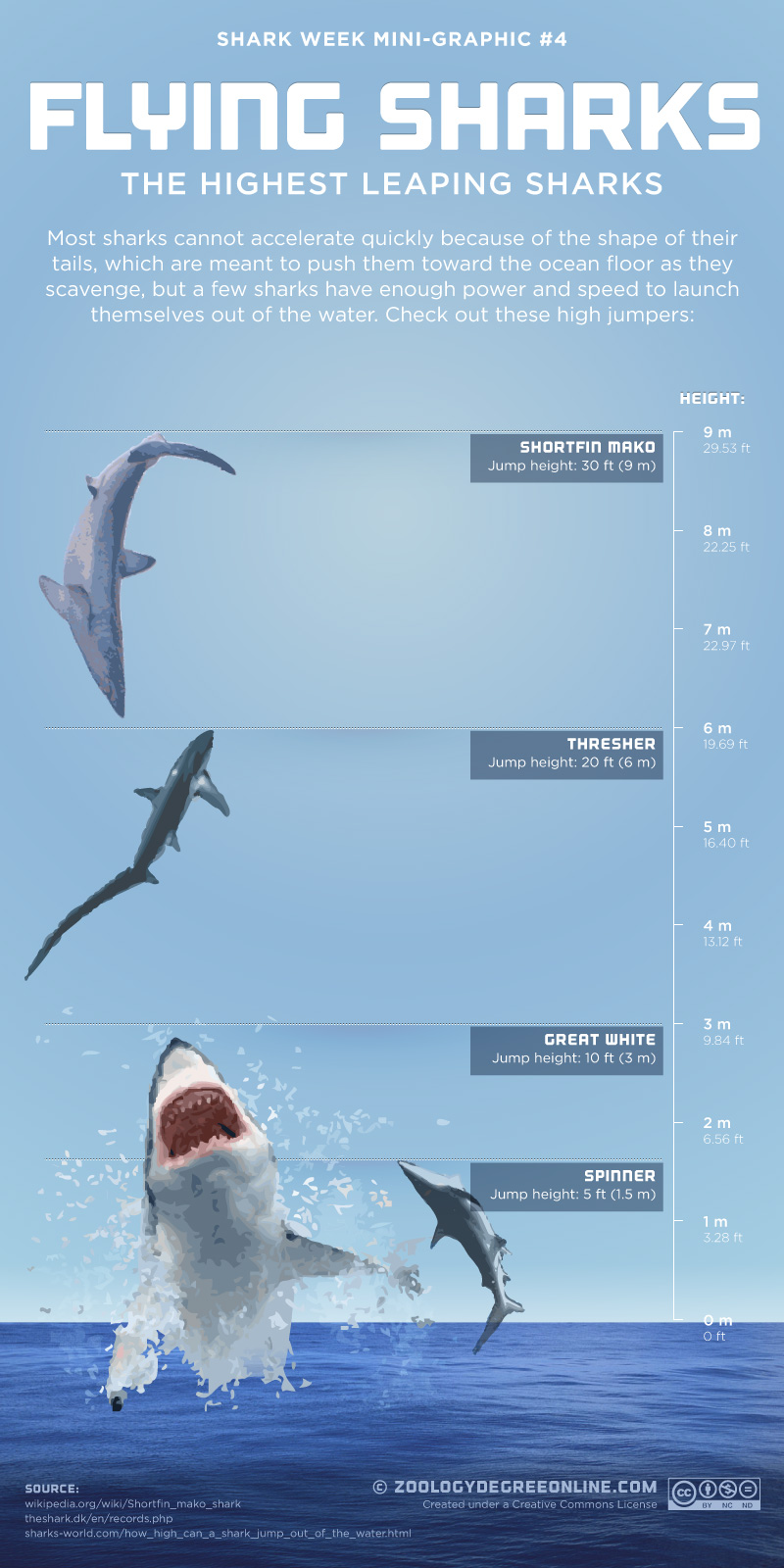 Flying Sharks - The Highest Leaping Sharks InfographicThresher Shark Jumping Out Water