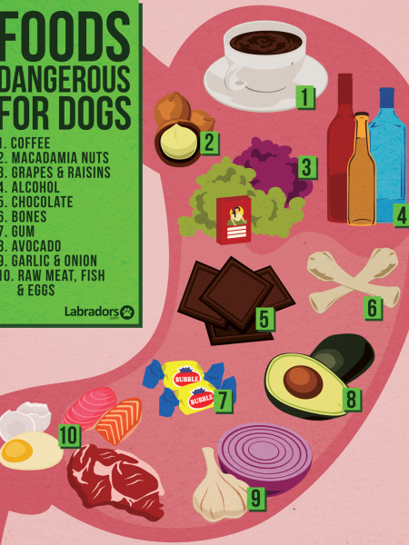 Foods Dangerous For Dogs Infographic