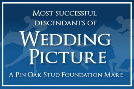 Foundation Mares: Wedding Picture Infographic