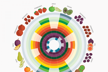 Fruits by Month Guide Infographic