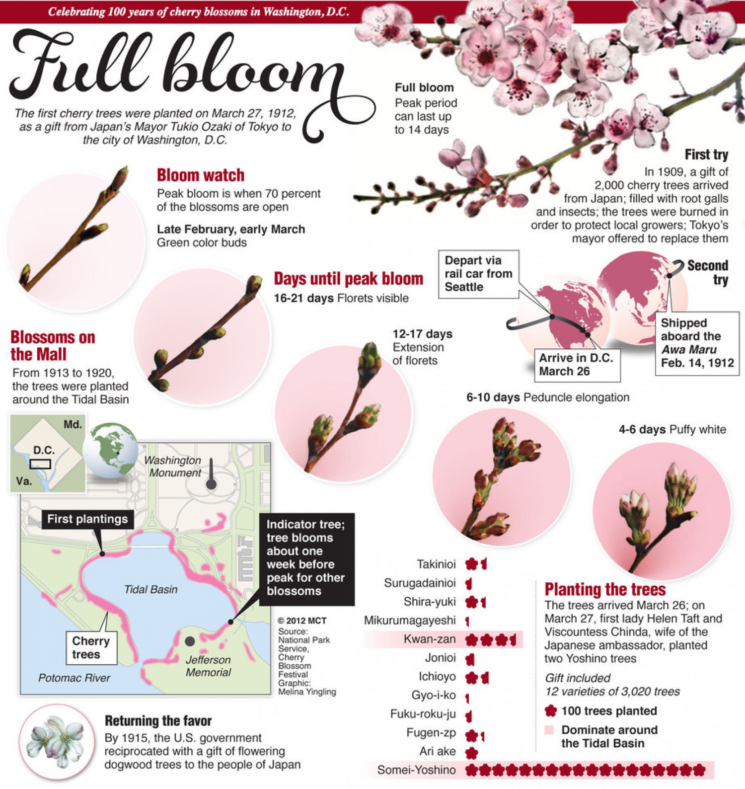 Full Bloom Infographic