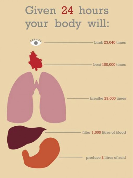 Given 24 Hours Your Body Will: Infographic