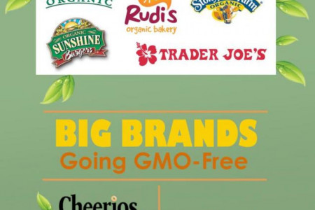 GMOs in America Infographic