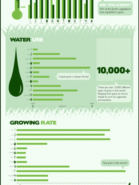 Grass: The 12 Most Common US Grasses  Infographic