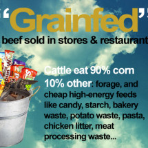 Grass-fed Beef vs Grain-fed Beef Infographic