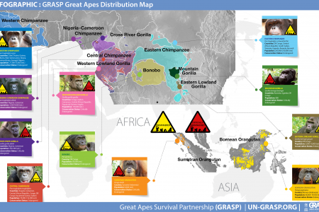 Great Apes Distribution Map Infographic