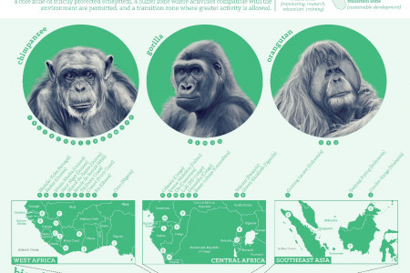 Great Apes Emphasize Importance of Biosphere Reserves Infographic