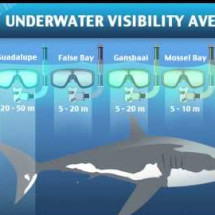 Great White Shark Cage Diving Hotspots of the World [VIDEO] Infographic