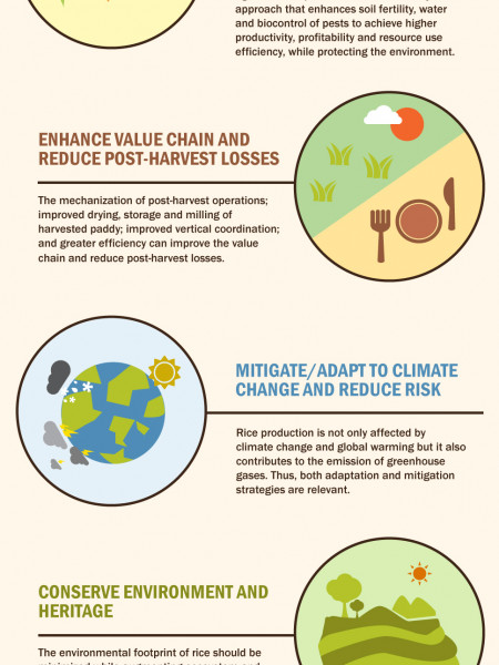 Growing Rice Smartly Infographic