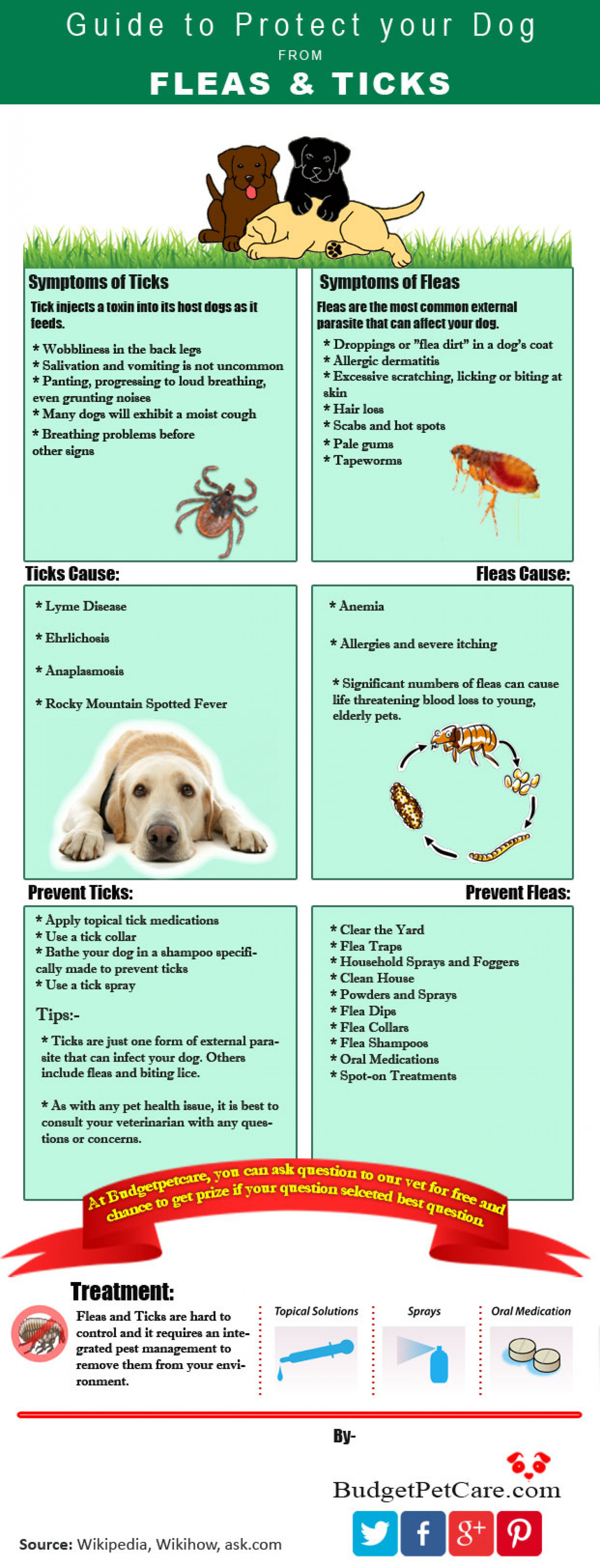 Guide to Protect your dog from Fleas and Ticks Infographic