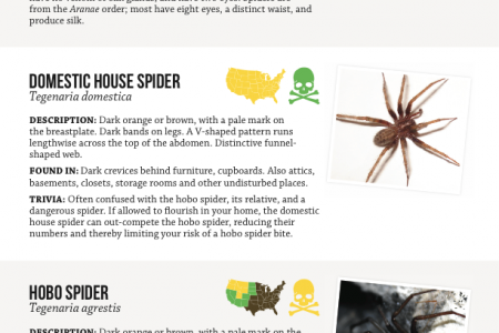 Harmless or Deadly: How to Identify Common House Spiders Infographic