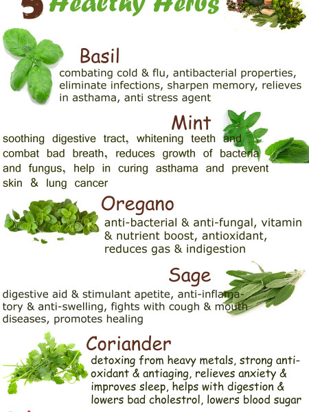 Healthy Herbs Infographic