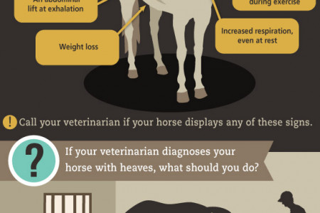 Heaves in Horses Infographic
