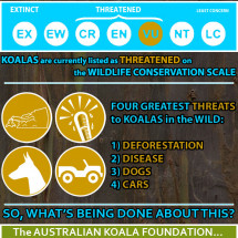 Help Us Save The Australian Koala! Infographic