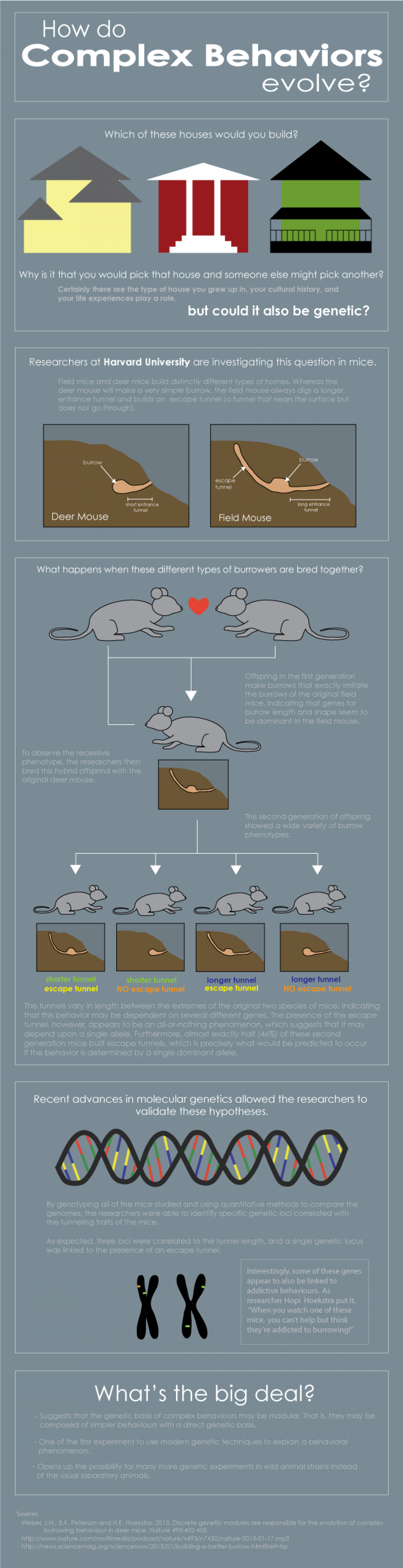 How do complex behaviors evolve? Infographic
