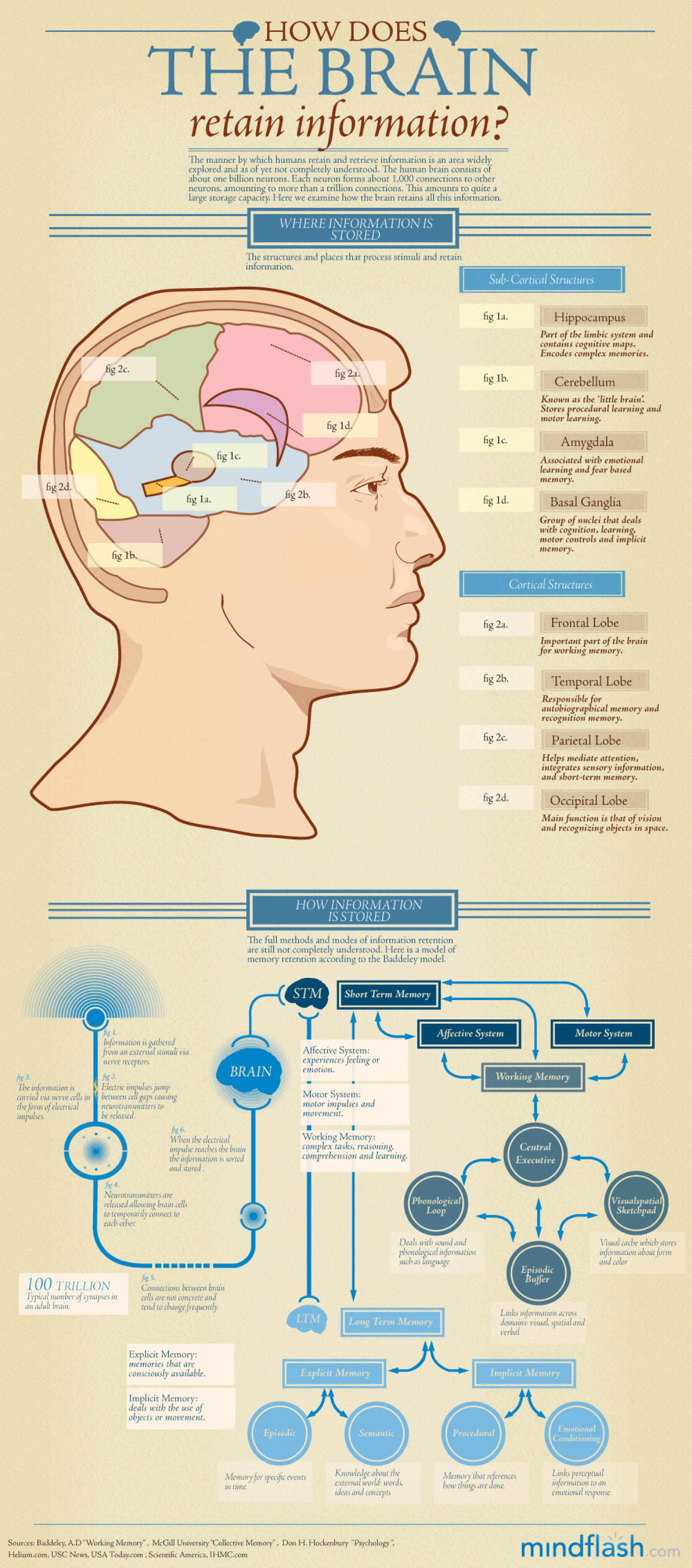 How Does the Brain Retain Information?  Infographic