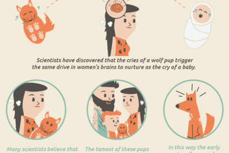 How dogs became our best friends! Infographic